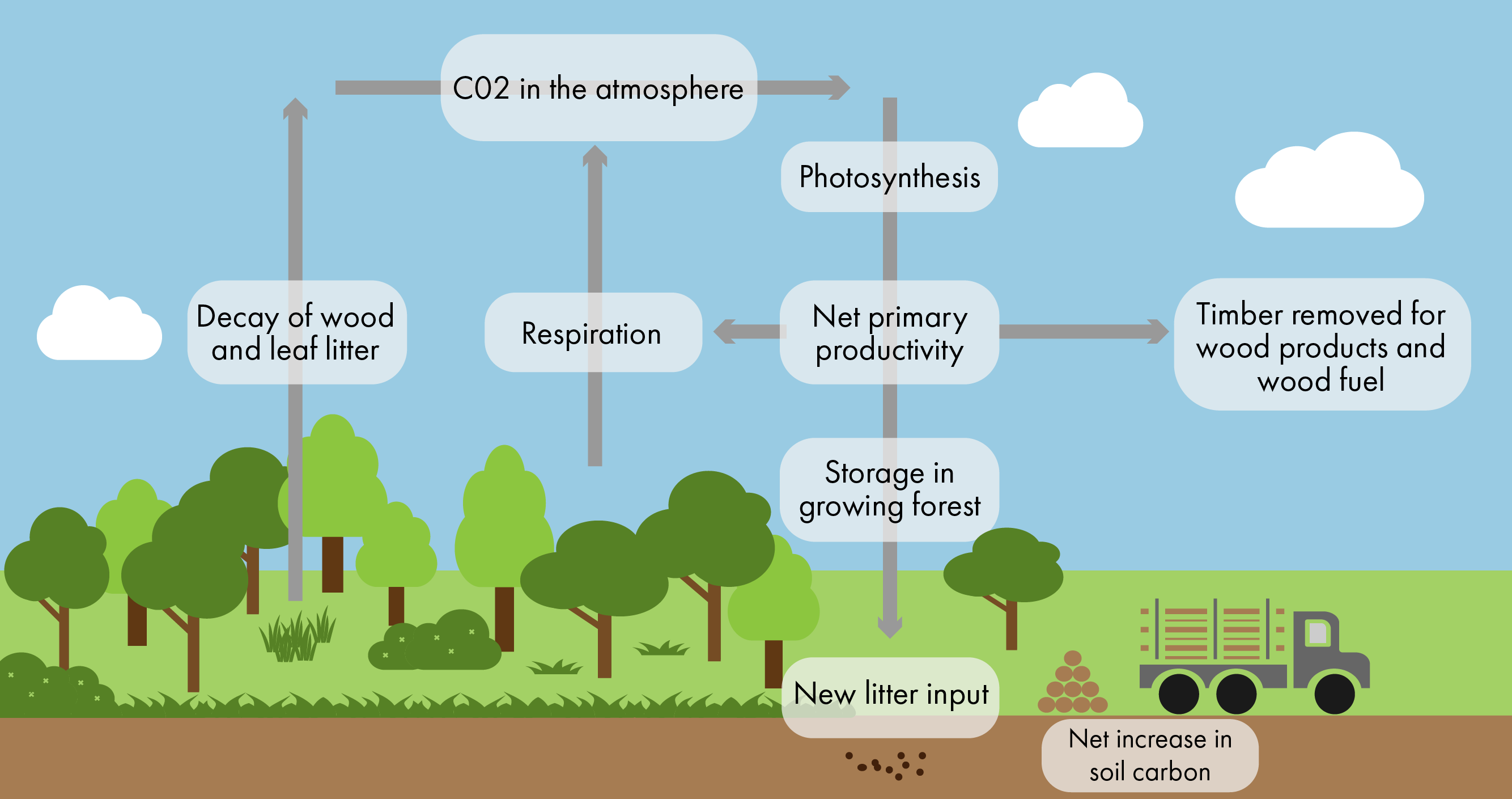 Trees can remove CO2 from the atmosphere and store it. The stored CO2 can later be released either through decaying biomass as litter (foliage, deadwood etc.) or absorbed in the soil