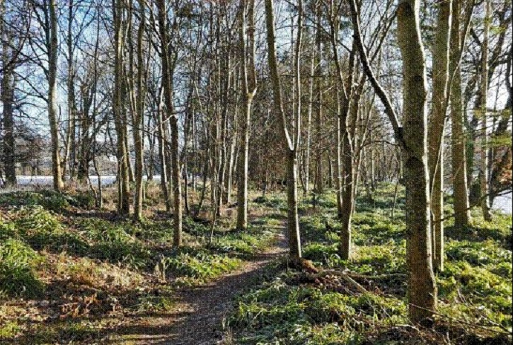 Peebles Community Trust has purchased Eshiels woodlands, and is improving biodiversity, and sustainable productive management through community ownership and partnership