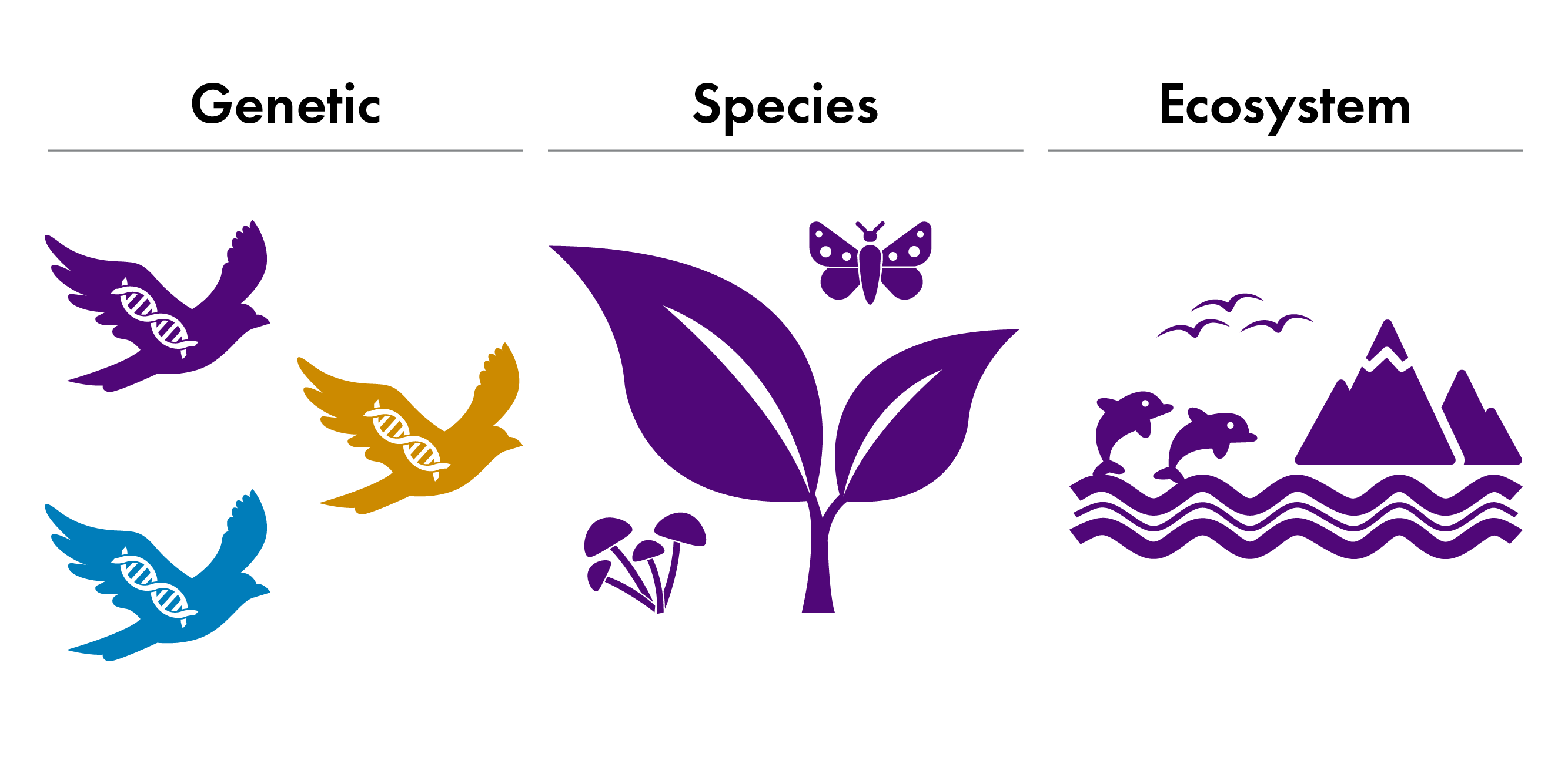 Image showing genetic diversity, diversity between species, and diversity of ecosystems. Together these three levels of variation are known as 'biodiversity'.