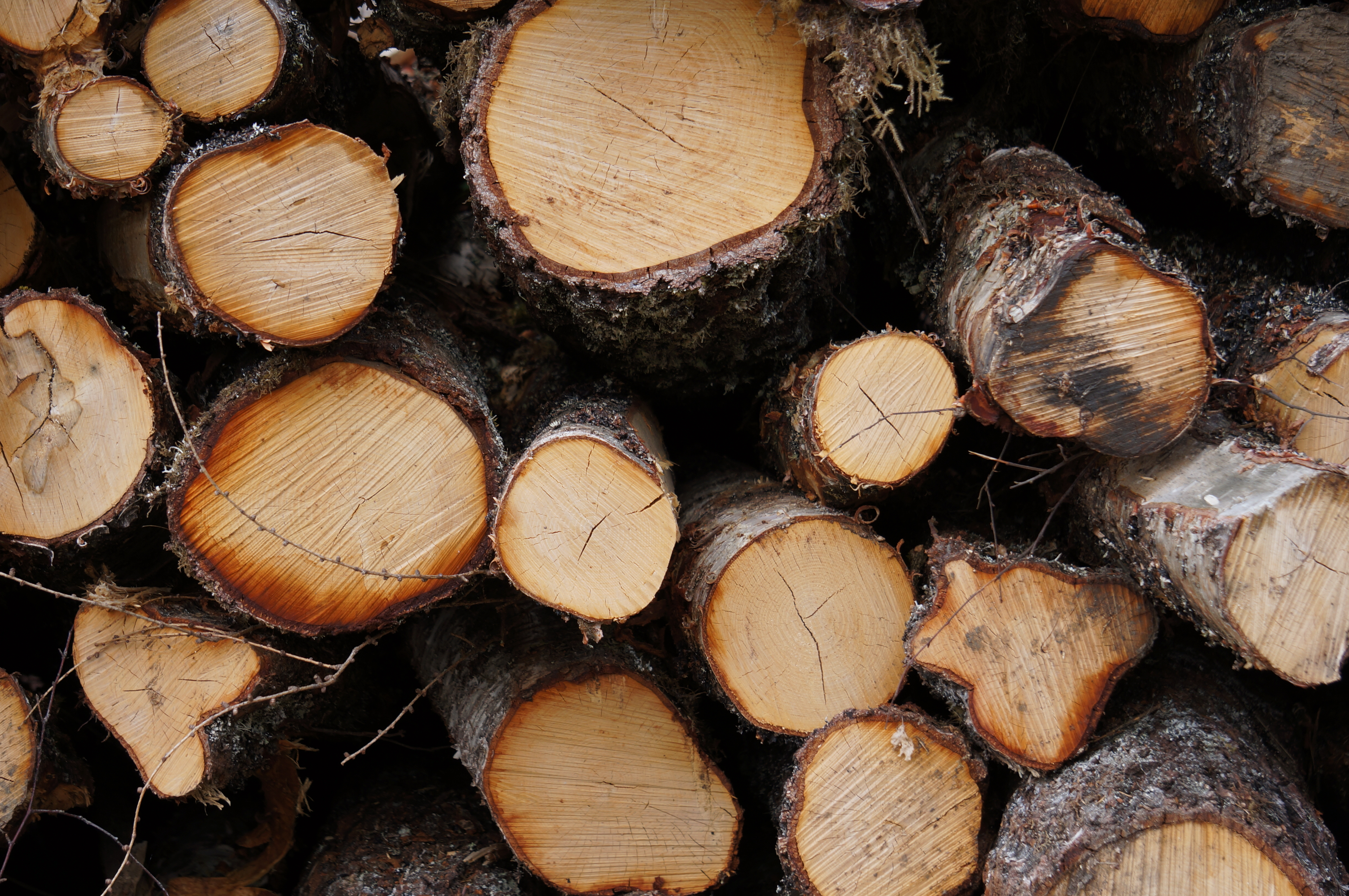 Close-up image of a stack of logs.