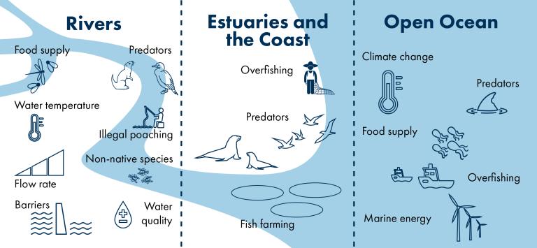Image showing the pressures facing wild salmon across rivers, estuaries and open ocean